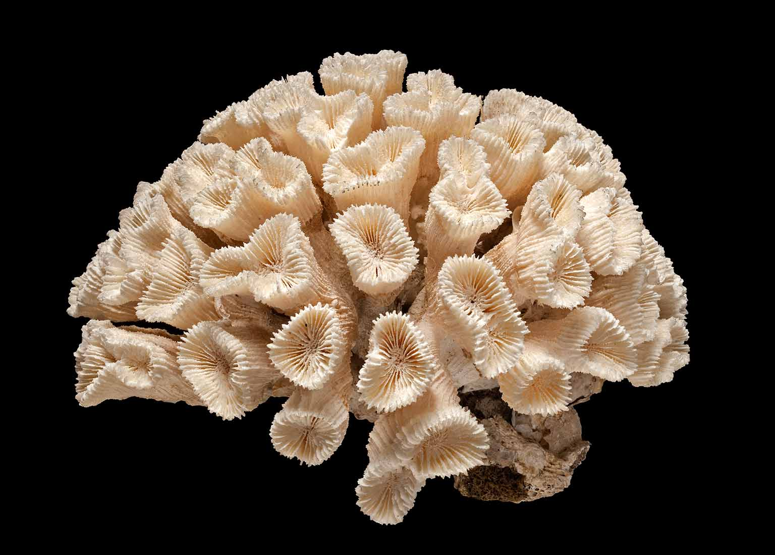 3. Coral Reefs: Secret Cities of the Sea, Natural History Museum - Coral specimens © The Trustees of the Natural History Museum, London