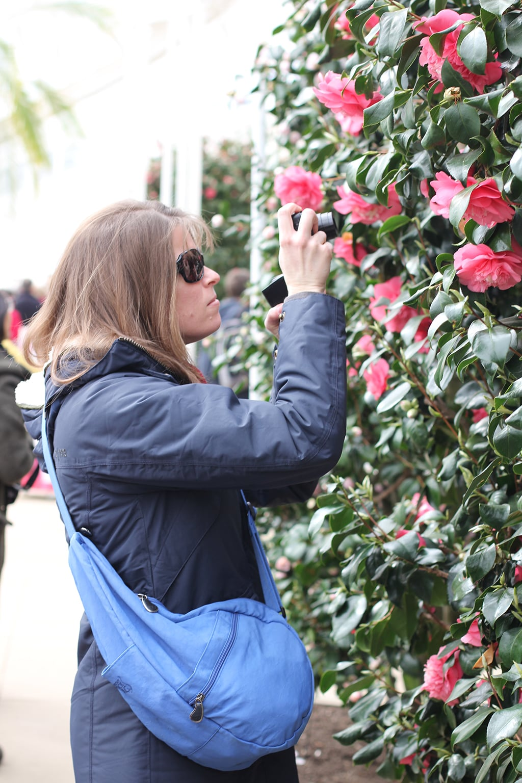 Admiring the camellias at Chiswick House and Gardens -