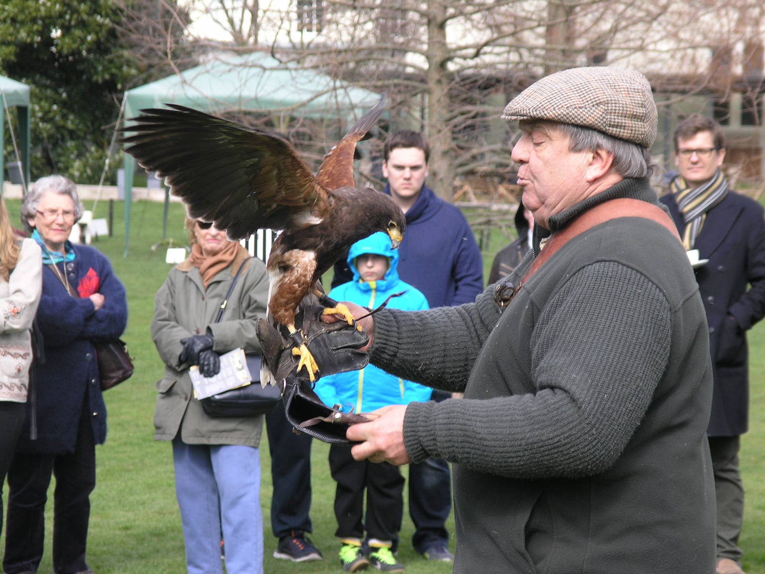 Falconry at Dulwich Picture Gallery -