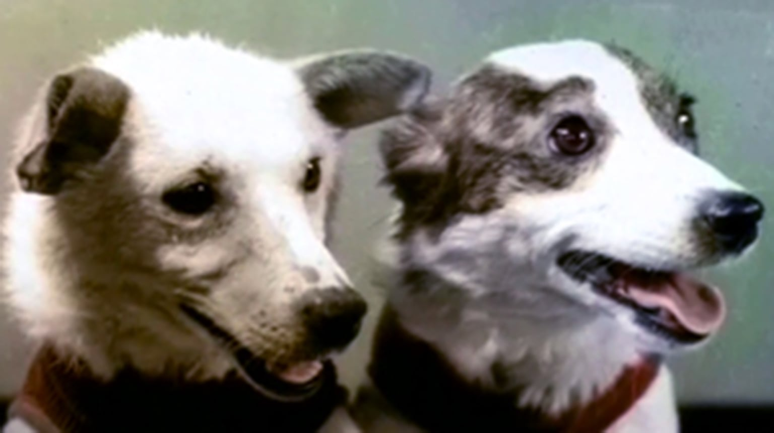 Belka and Strelka - First dogs to orbit the Earth and successfully return