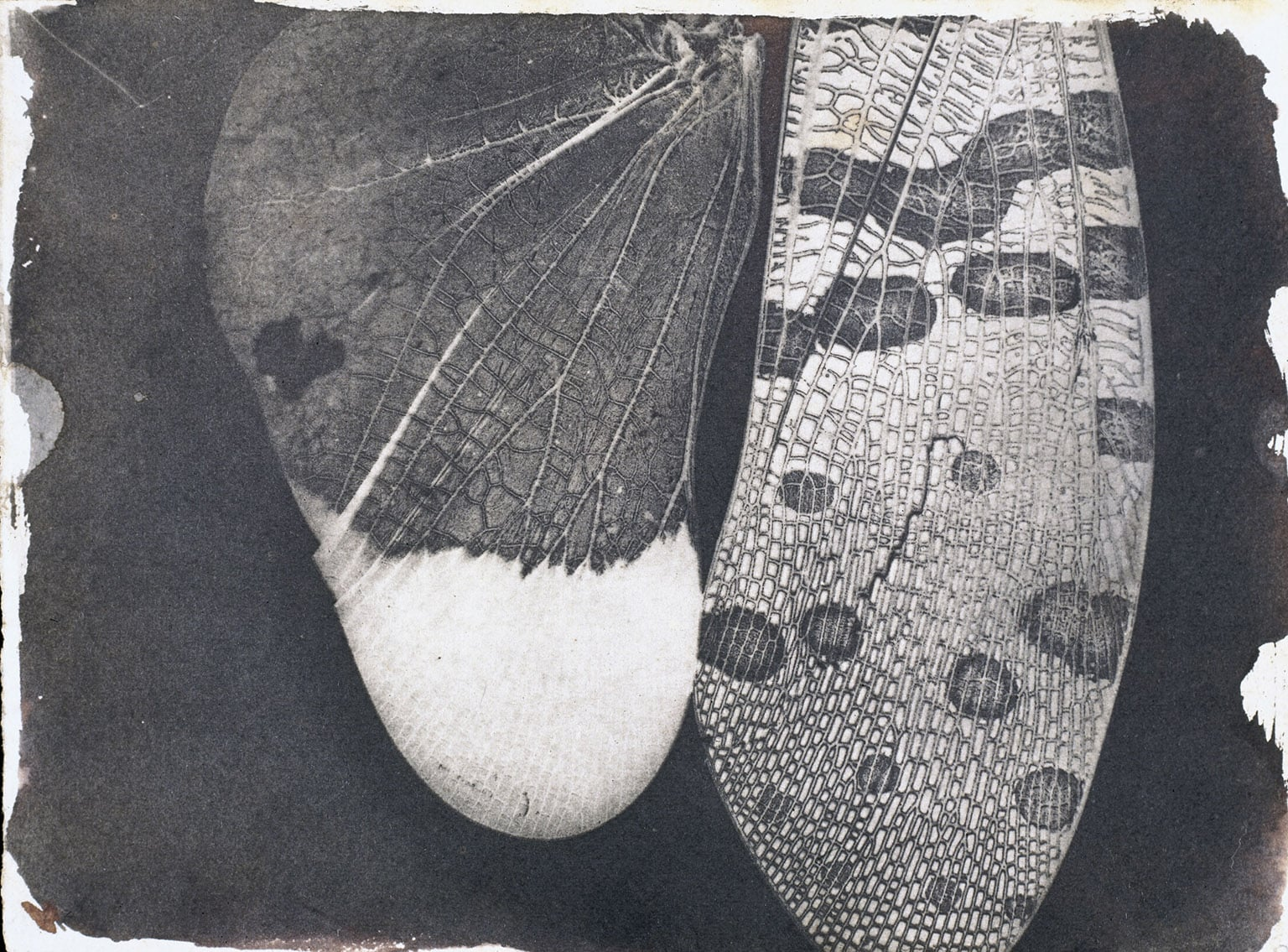 2. William Henry Fox Talbot - Insect wings, c.1840 © National Media Museum