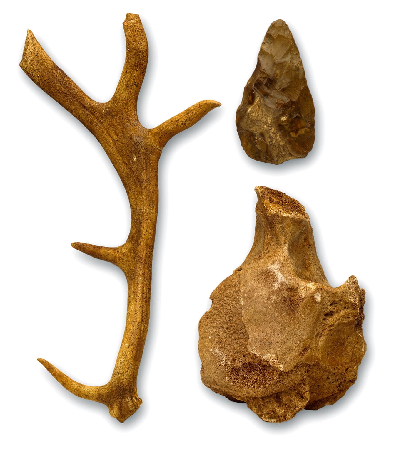 Hoxnian anters, bones and hand axe from Swanscombe