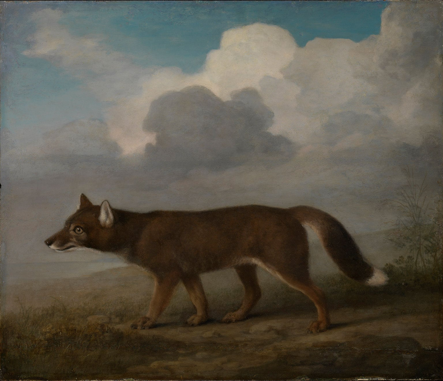 5. Cook and the Kangaroo, Horniman Museum and Gardens, free to all - George Stubbs, Portrait of a Large Dog by George Stubbs, 1772. National Maritime Museum