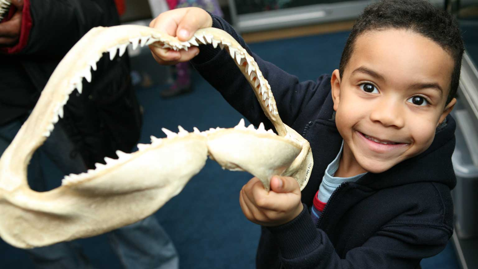A visitor holds a shark's jaw at the museum's Hands on Base
