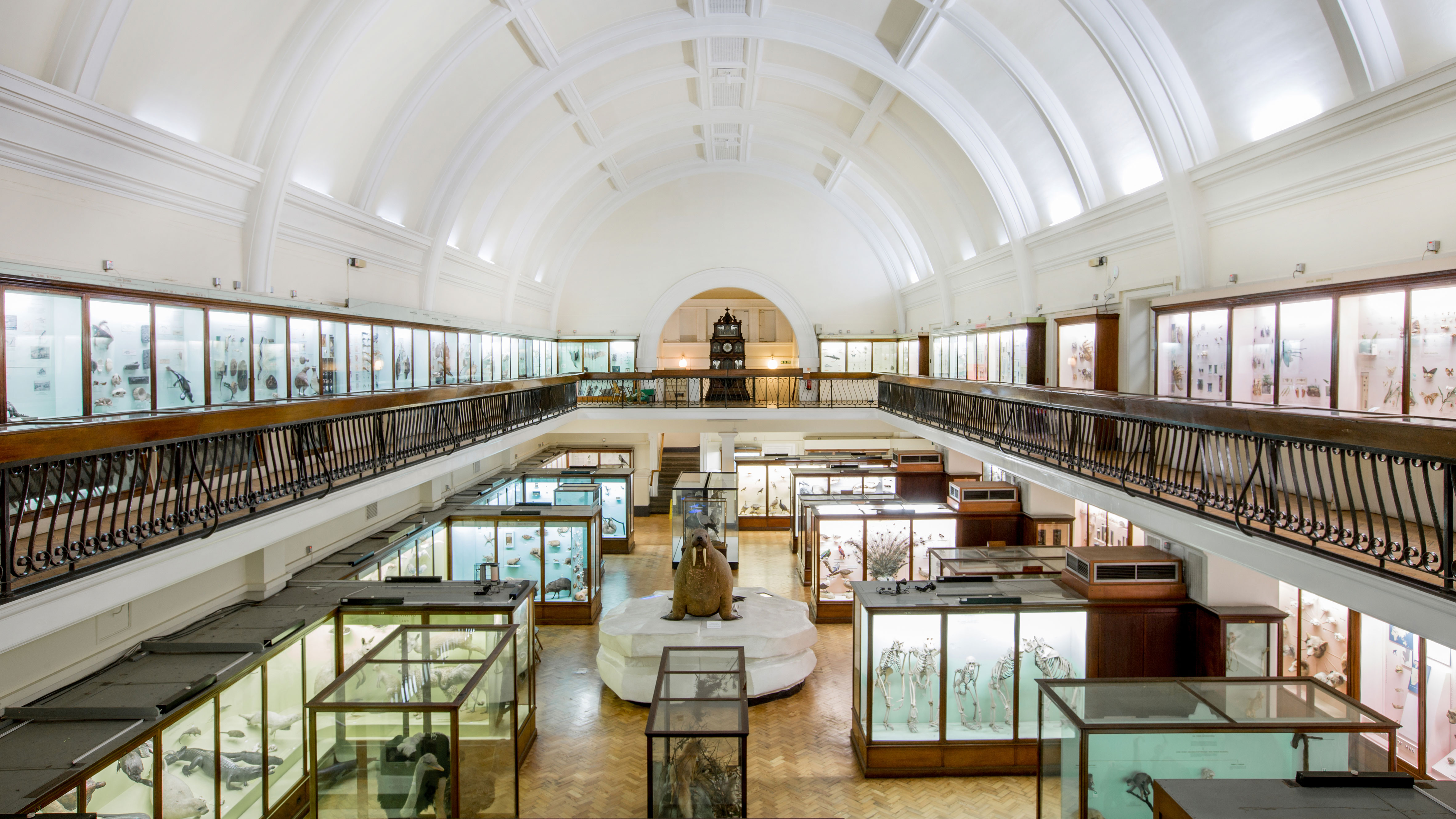 Horniman Museum Natural History Gallery