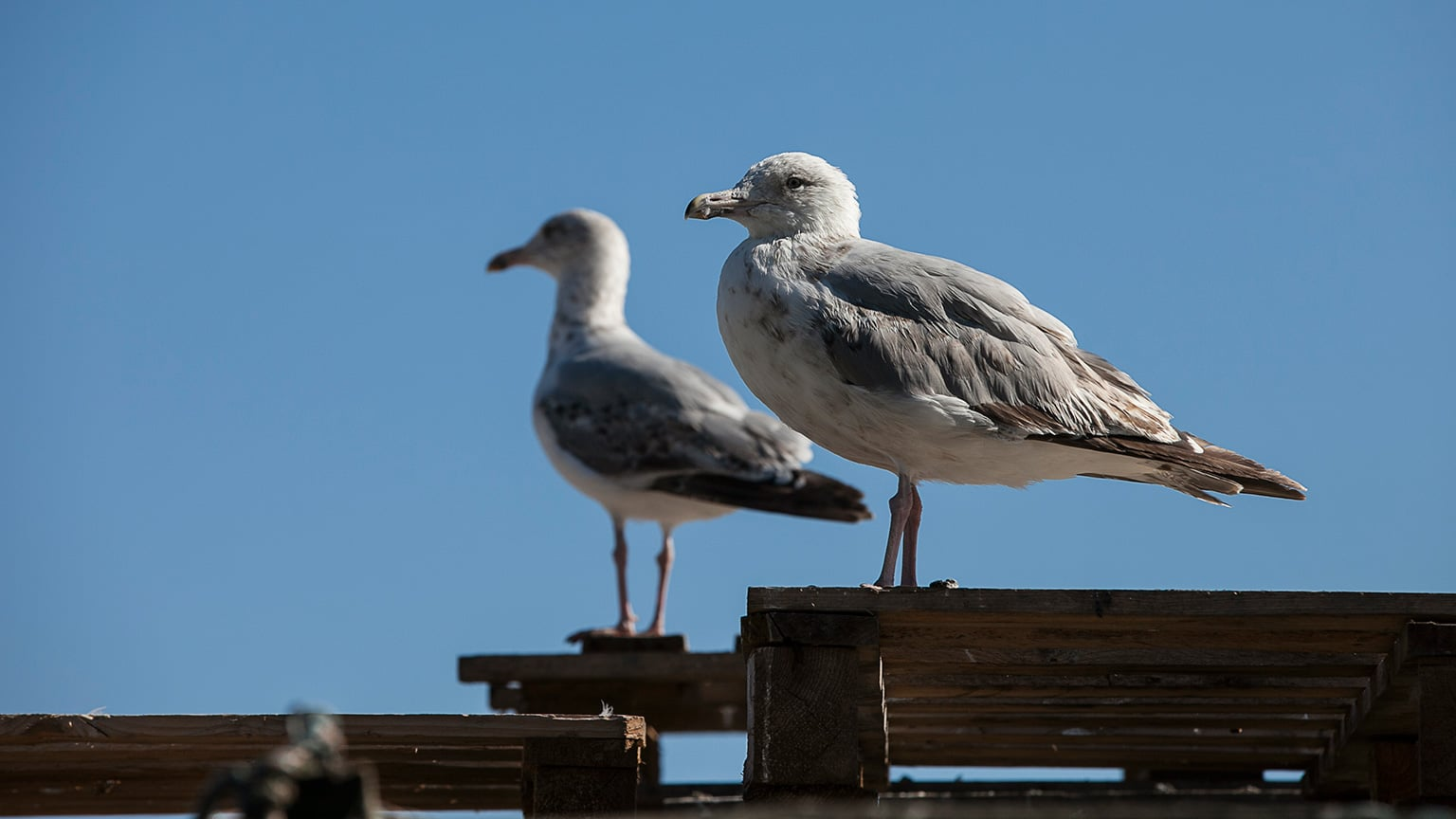 Sea gulls like to perch on the Jerwood Gallery roof - Courtesy Pete Jones