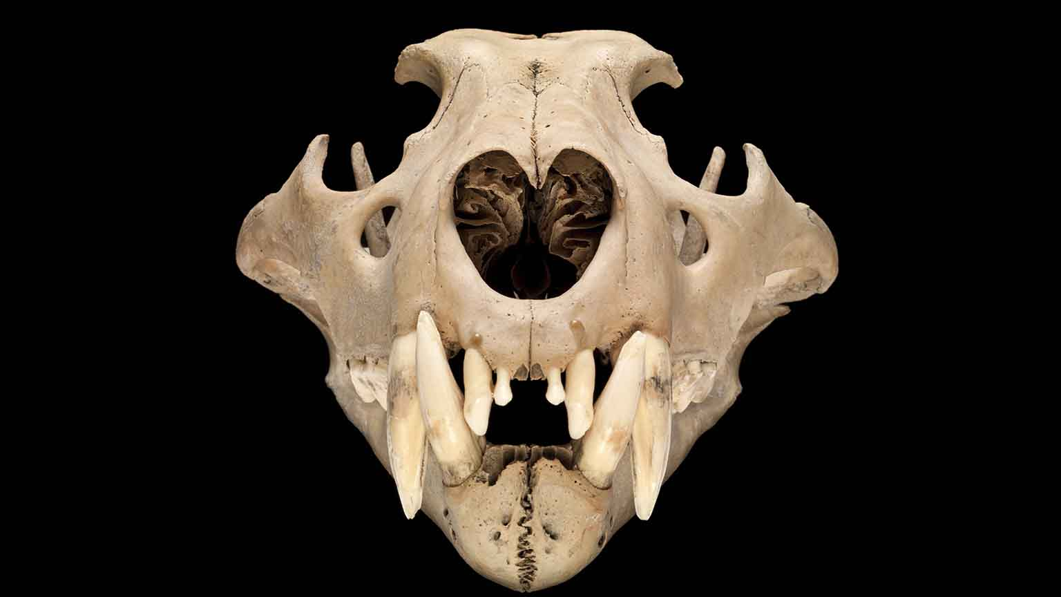 Natural History Museum London - Museums and galleries - Art Fund