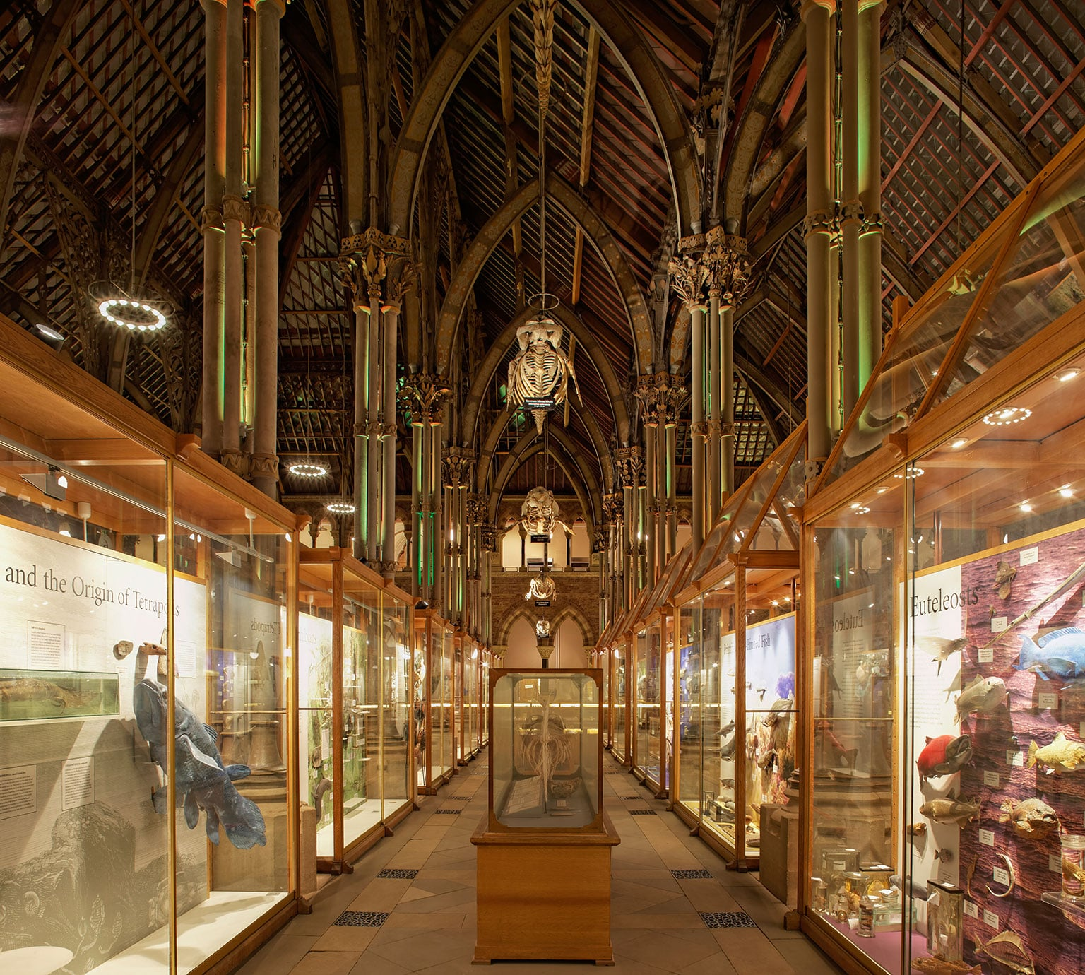 Museum Of Natural History Fund