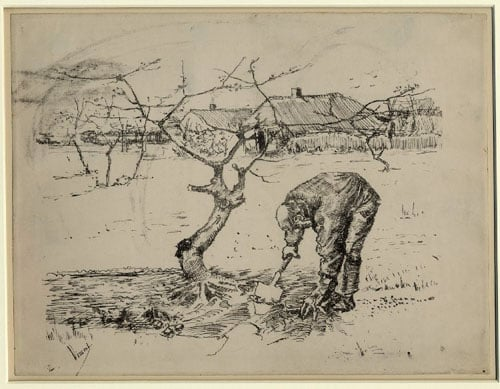A Man Pruning the Roots of an Apple Tree