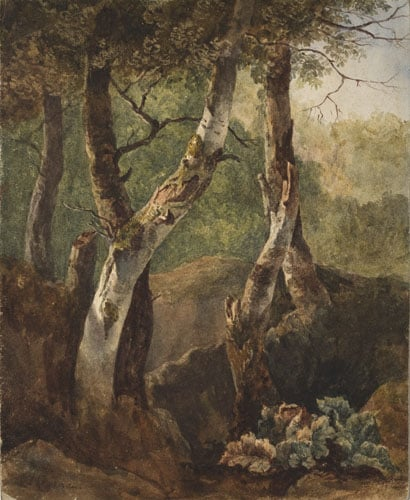 Study of trees after Pynaeker