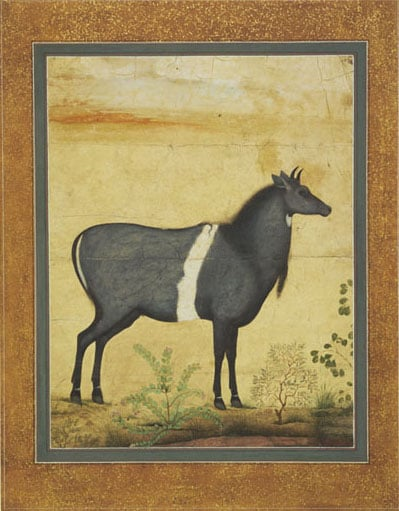 Mogul and Indian paintings