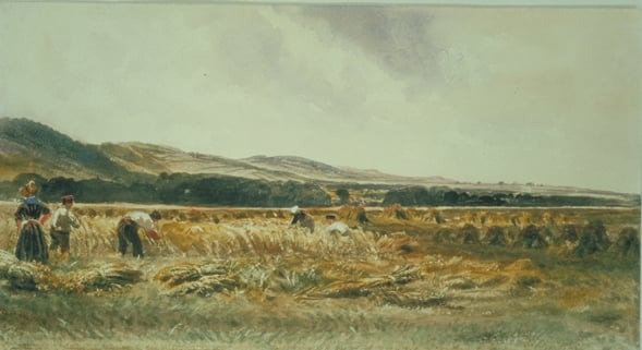 Harvest Field & Sand Dunes & A Mountain View