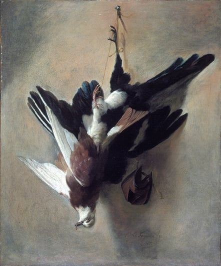 A Pigeon and Magpie