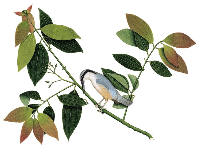 Album and watercolours of birds