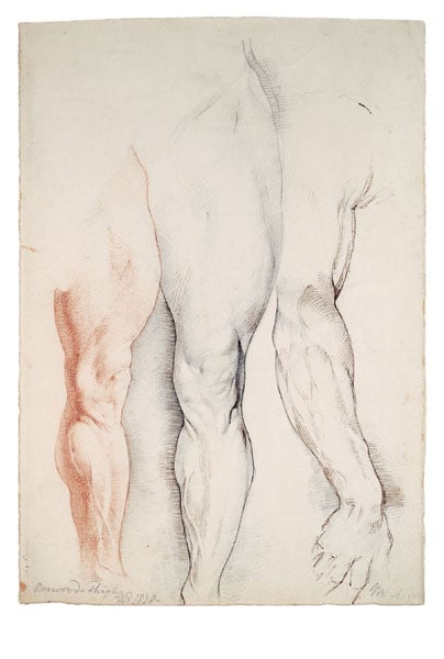 Boswood's Thigh and the Right Arm of Michelangelo's David