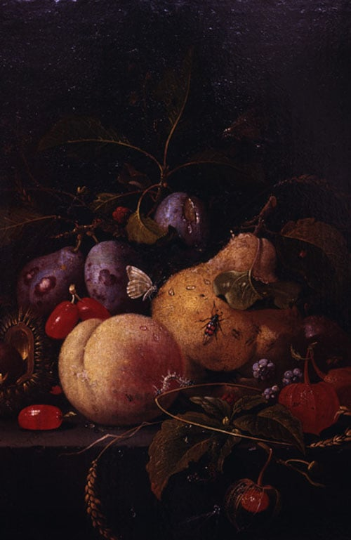 Fruit and Insects