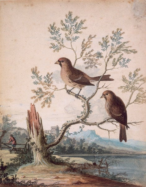 Two Tame Birds in a Landscape