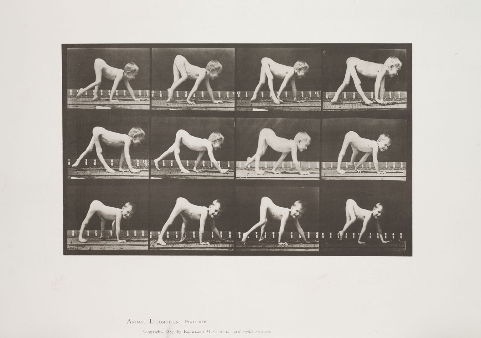 Hand Movements & Plate 530 from Animal Locomotion