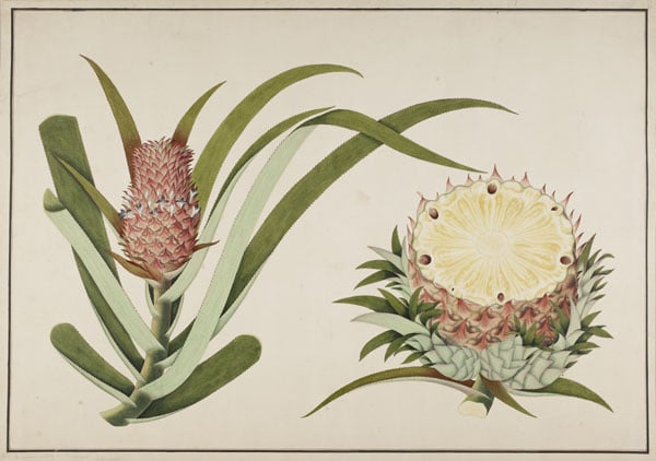 Collection of drawings and watercolours from the Raffles Family Collection