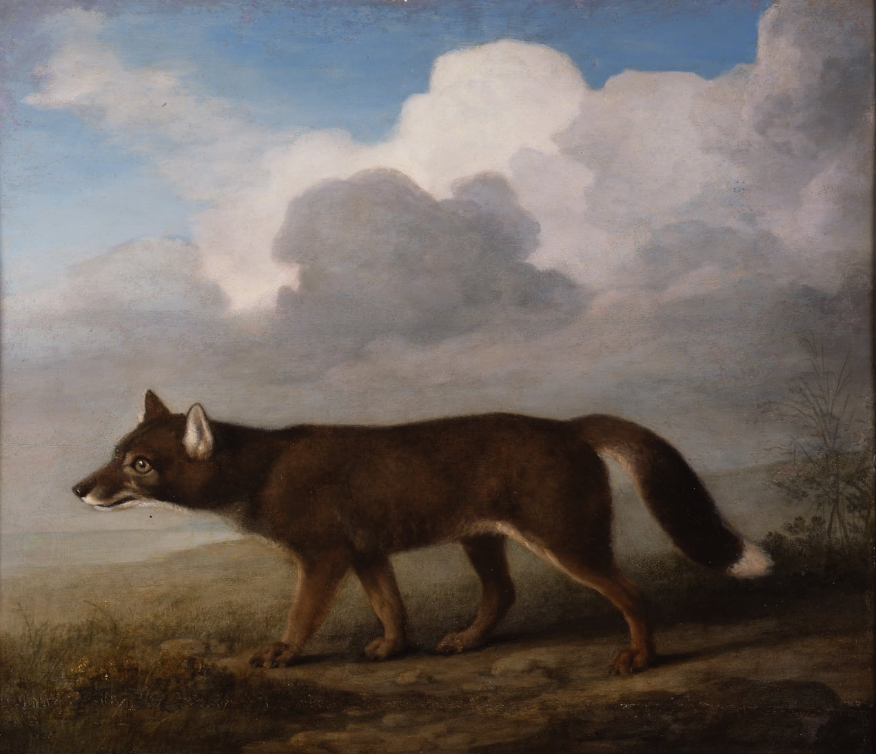 i) The Kongouro from New Holland; ii) Portrait of a Large Dog