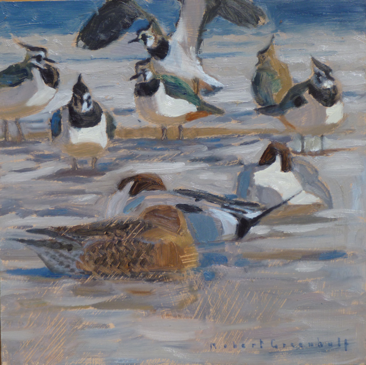 Robert Greenhalf, Pintails and Lapwings