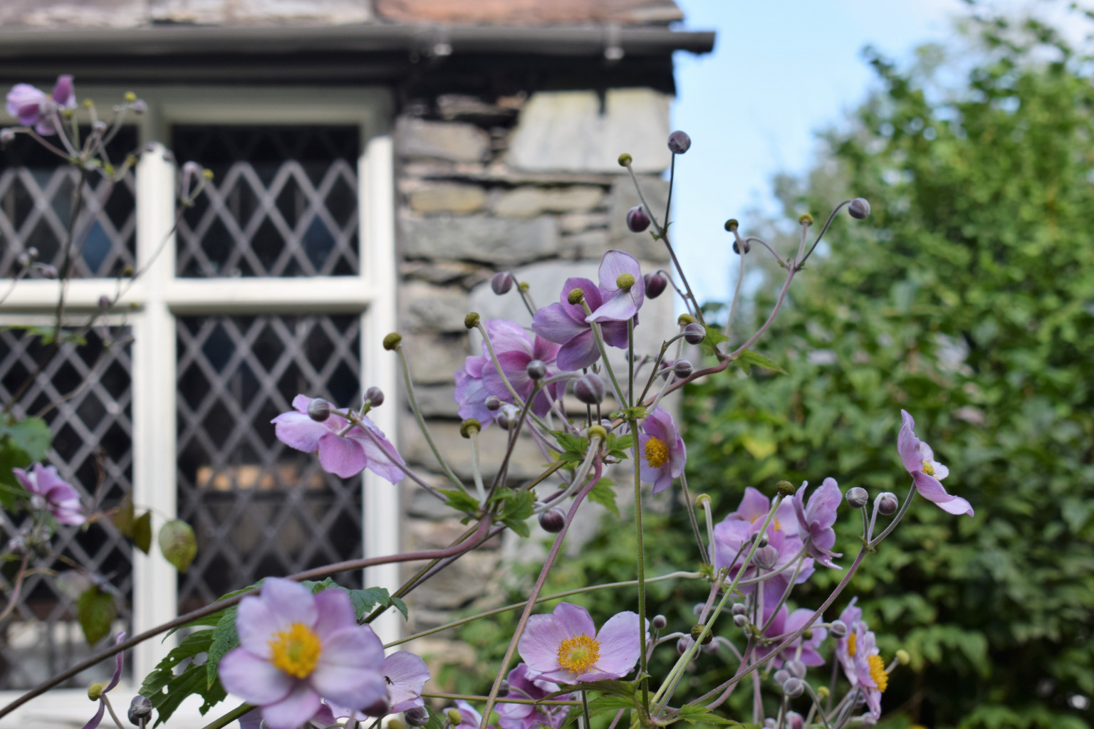 Explore the woods and gardens around Dove Cottage and learn to identify and work with plants.