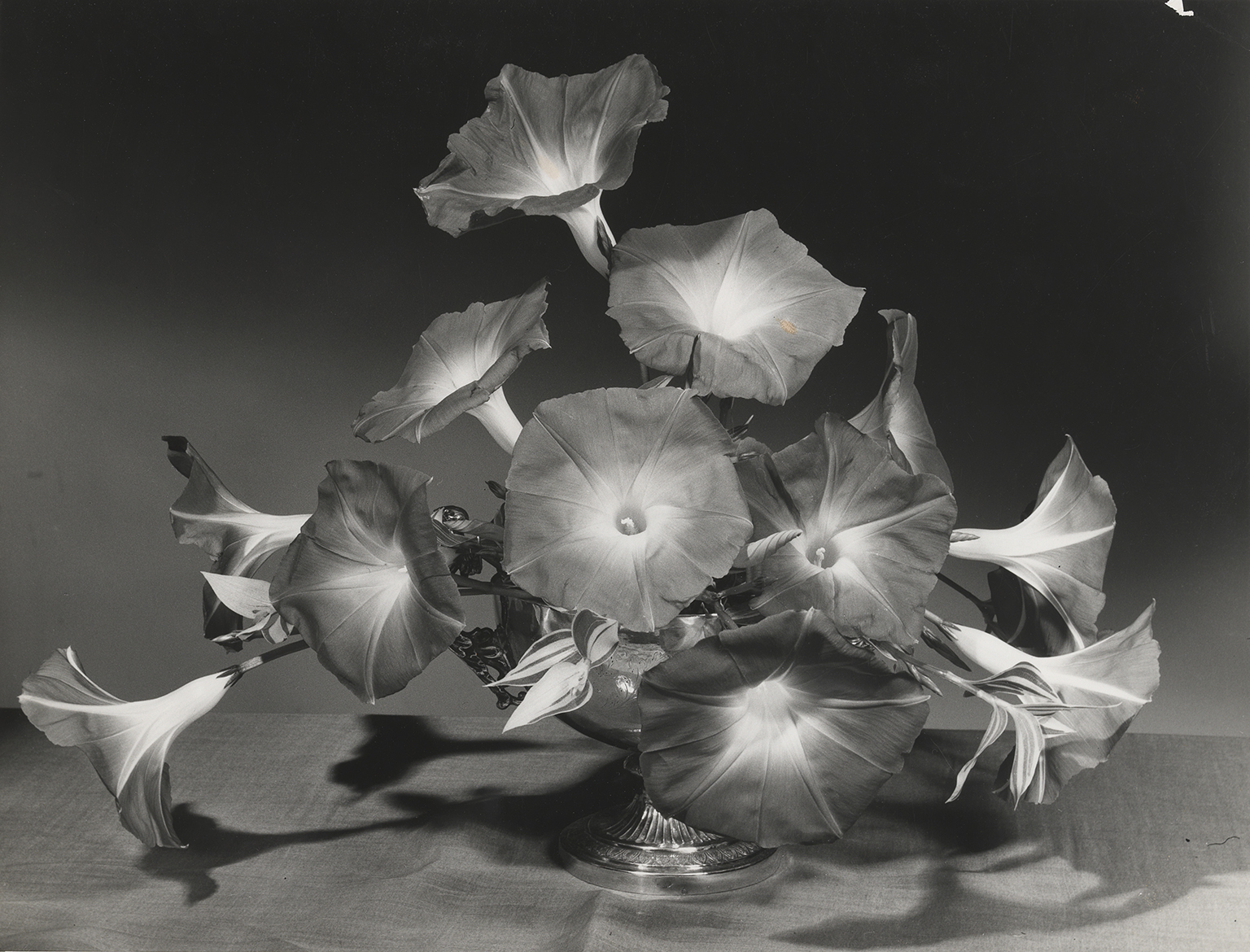 Morning glory arrangement by Constance Spry. Photo: Cowderoy & Moss Ltd, c.1930, RHS Lindley Collections