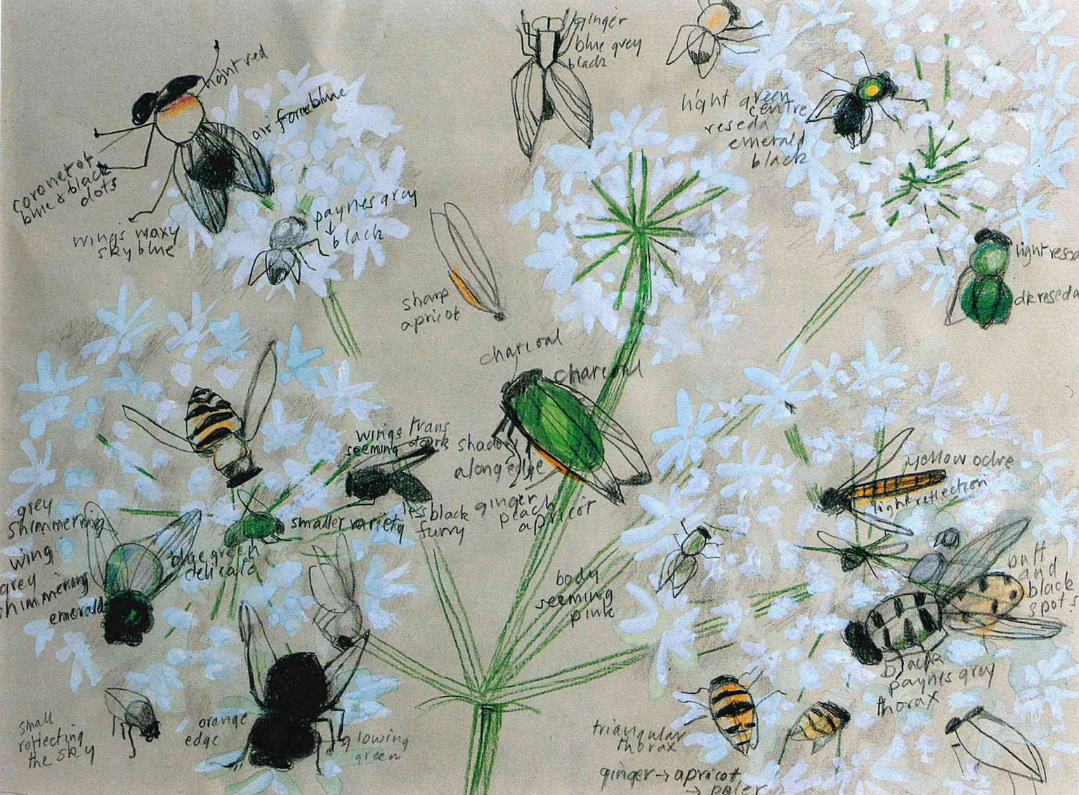 Mary Newcomb, Insects on Hogweed, date unknown © Mary Newcomb Estate