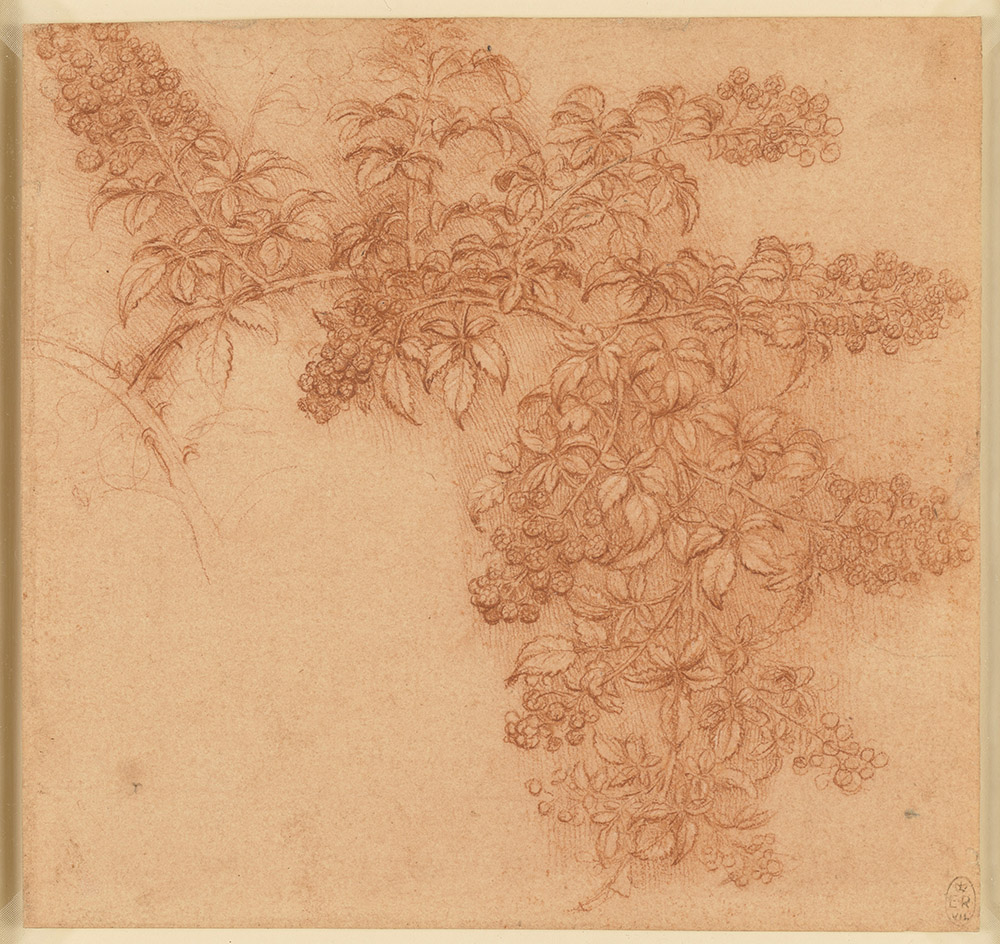 A branch of blackberry c1506-12  Leonardo drew plants and flowers throughout his life, following the tradition of naturalistic detail in 15th-century Italian art. His finest botanical drawings were made in connection with a painting of Leda and the Swan, but what started as studies towards a painting soon became scientific studies in their own right. Leonardo was fascinated by the growth patterns of plants and trees, and seems to have considered writing a treatise on the subject. This beautifully rendered drawing of a bramble was executed in red chalk sharpened to a fine point, to record the smallest details. The side branches are shown sagging under the weight of the fruit, for Leonardo was interested not merely in the shape of the leaves and berries, but also in their living form when subject to the natural forces of growth and gravity.  Southampton City Art Gallery, free to all, 10% off in shop with National Art Pass -