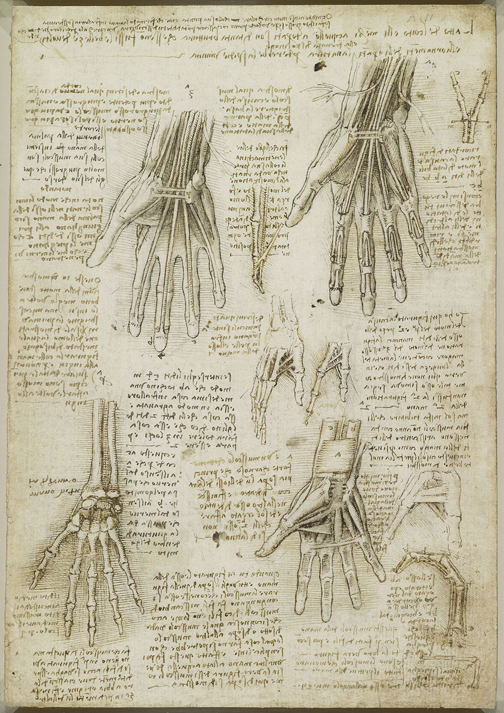 The bones, muscles and tendons of the hand c1510-11  Leonardo returned to the study of anatomy around 1506, and worked intensively on the subject for the next seven years. He intended to publish an illustrated treatise on human anatomy, but this was never completed, and the work of one of the great anatomists of the Renaissance thus had no impact on the discipline. In the winter of 1510-11 Leonardo was apparently working in the medical school of the University of Pavia, to the south of Milan, where he dissected up to 20 human bodies. His investigations focused on the mechanisms of the bones and muscles, and he developed novel illustrative techniques to depict these mobile, layered, three dimensional structures. Here Leonardo demonstrates the structure of the hand, building it up layer by layer in the manner of an engineer – the bones, then the muscles of the palm and wrist, then the two layers of flexor tendons, with details examining the action of the tendons.  Birmingham Museum & Art Gallery, Free to all, 10% off in café with National Art Pass -