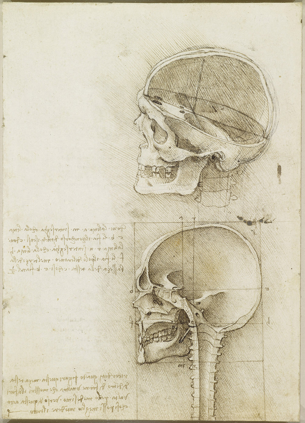 The skull sectioned, 1489  Leonardo wanted to find the relationship between an individual's emotions, pose and expression so that he could paint a figure more convincingly. He therefore investigated the links between the brain and the rest of the body, determining the paths of the sensory nerves and trying to find the location of the senso comune, the supposed site at which the senses converged – the centre of human experience, and thus the site of the soul. In April 1489 he cut a human skull in a variety of sections to study its external and internal structure. The lower drawing shows the skull sawn in half within a perfect square, the senso comune at the exact midpoint of the height of the skull and a third of the way back. Leonardo's grasp of three-dimensional structure is remarkable, and elsewhere he compared the cranium to a domed building.  Leeds Art Gallery, Free to all, 10% off in shop with National Art Pass -